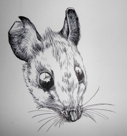 Mouse Drawing by Kay De Garay