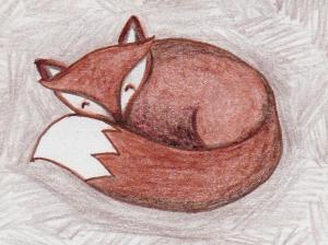 Colour Pencil Drawing of a Fox by Kay De Garay